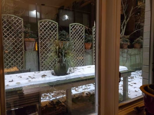20191122-13Ginger'sPatio